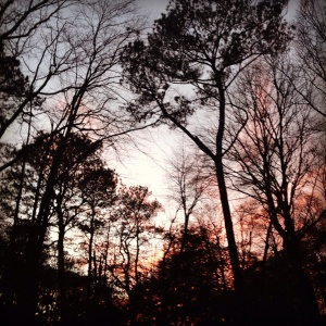Love the light and color at sunset in the woods behind my home.